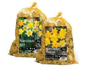 5kg of Daffodil Bulbs £5.00 @ Lidl from 22/8