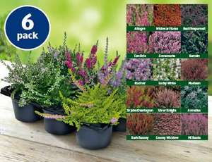 Autumn Heathers set of 6 just for £3.99/set @ Aldi starting on 29th August 2013