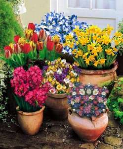 100 spring  bulbs +wooden well and pump + 75 free bulbs £9.97 at Spalding Bulbs