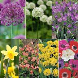 FREE 200 Spring-Flowering Bulbs worth a total of £38.37 plus £5.60 P&P Van Meuwen