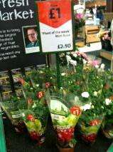 Plant of the week - Mini Rose £1 (previously £2.50) @ Morrisons