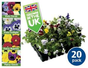 20 Pack Winter Bedding Plants £2.49 @ Aldi from Thur 24/10