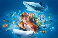 Annual Sea Life pass (10 sites + free pass to Theme Park) for £40 (+ 10% Quidco, possibly £36)