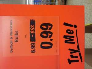 Big 5kg bag of daffodil bulbs 99p at lidl