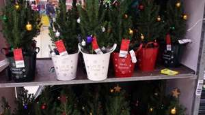 Tesco Real xmas tree potted with roots comes with lights aswel will keep growing if u look after it £10