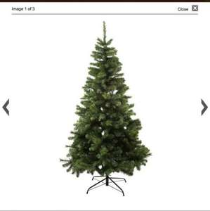 Sainsburys Christmas tree was £50 now £16.66