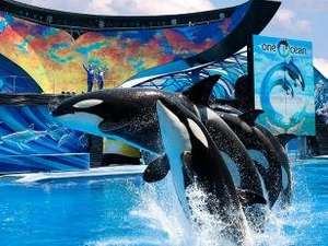 14 Day Combi Ticket For Orlando SeaWorld, Aquatica and Busch Gardens £80, FREE Delivery @ American Attractions.