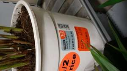 Indoor real plants £1.49 @ homebase