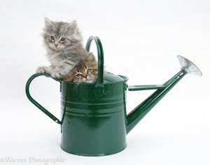 ASDA 9 litre watering can - 88p - click & collect