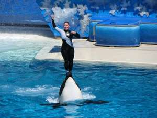 Seaworld Orlando weekday admission £31.81 @ Viator