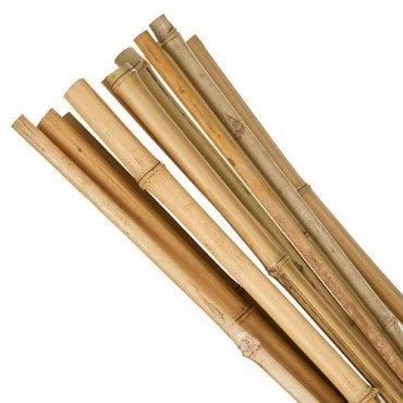4ft Bamboo Canes x10 @ Poundland £1