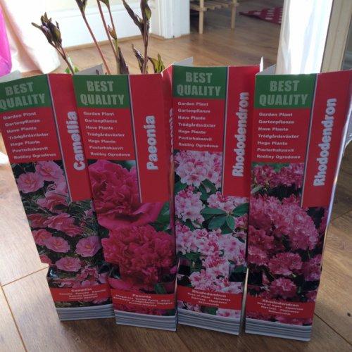 Garden plants - £1.79 @ Home Bargains