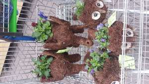 Asda, garden plants, half price, elephant and owl from £4