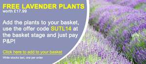 12 free lavender plants from Suttons Seeds, pay £4.99 postage