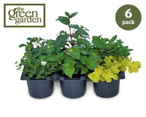 ALDI - Thursday 24th April. - SIX Quality hanging basket plants £3