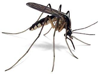 Mosquito plug & 20 tablets - £1.99 @ B&M