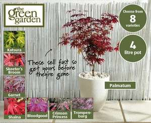Japanese Acer Tree 75-90cm Height, 8 Varieties £10.99 @ ALDI from Thur 22nd