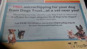 Free microchipping for dogs in todays Metro with Dogs Trust