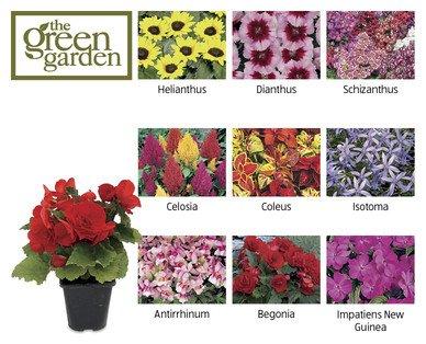 Instant Colour Bedding Plants 99p at ALDI