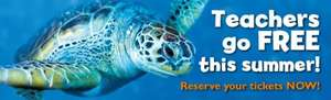 Teachers go FREE to SEA LIFE Great Yarmouth & other sealife centresthis summer!
