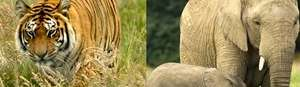 Half Price Family Ticket Knowsley Safari Park Only £29 Use In School Hols @ Hallam FM And Others (listed in post)
