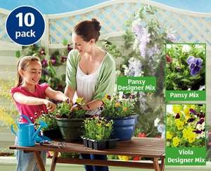 Autumn Bedding Plants 10pack (winter) at ALDI - £1.99