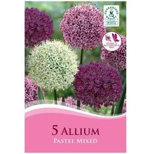 Autumn planting bulbs in Stock @poundland