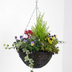 Autumn hanging baskets £7 on three-for-two £14 @ Sainsbury's instore