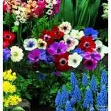 Spring bulbs and bare root perennials 1p per pack plus free delivery with code @ leadthegoodlife