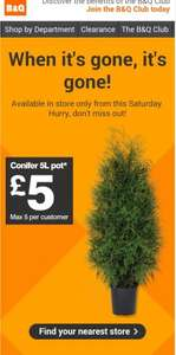 B&Q Conifer 5 litre Pot maximum 5 per customer (From Sat 20th) - £5
