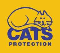 Cat neutering £5 in Swansea postcodes: sa1-sa10
