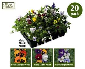 Winter Bedding Plants 20 pack £2.49 at ALDI