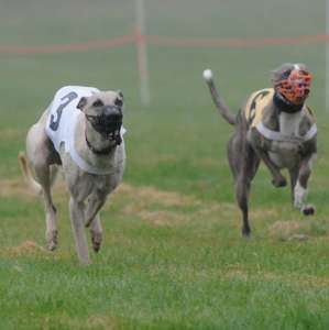 Free entry to the dogs at Nottingham Greyhound Stadium