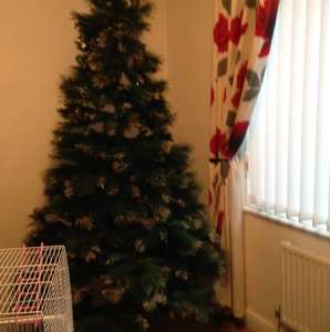 Christmas tree with glitter tips 7ft £60 @ B&M