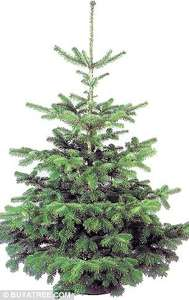Real Christmas Trees 5 - 6 ft Now Half Price @ JTF Warehouse £5.99