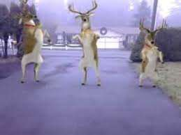 Dancing Christmas Reindeers video app for Android and Itunes