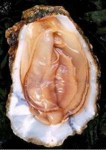 Fresh (Live and in Shell) Oysters £2.79 @ Lidl