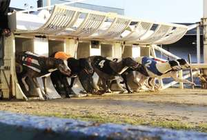 Wimbledon Dogs. Free Entry, Racecard & a Pint. Just print voucher and produce at turnstiles