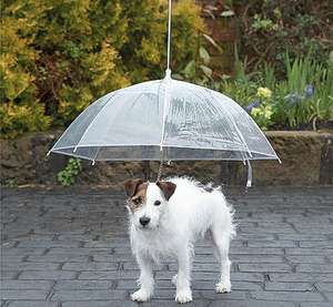Dog Umbrella - B&M Stores - Now £1!