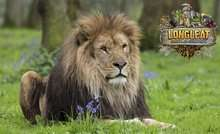 Longleat Safari Park: Entry For an Adult (£27.15) or Child (£19.50) With Food and Drink Voucher (Up to 20% Off) @ Groupon