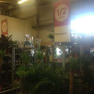 House Plants half price £15 @ Homebase