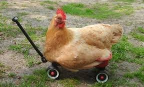 Half price medium whole chicken £2.50 @ M&S