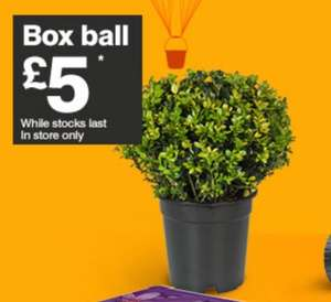 Box ball plant - £5 @ B&Q (from tomorrow)