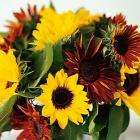 15 Sunflowers bouquet - £19 delivered @ JohnLewis !