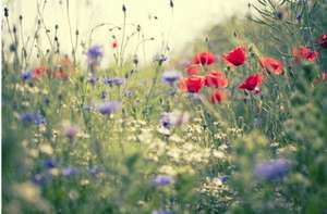 free packets of UK native wild flower seeds.