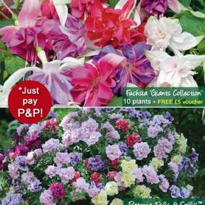 15 Free Plants for Hanging Baskets just pay £4.95 P&P @ thompson-morgan
