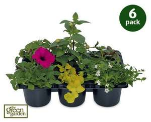 Hanging Basket Plants 6nos.£2.99 at ALDI