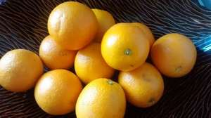 15 loose oranges for £1.00 @ Worldwide Foods