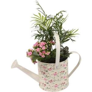 Hanging baskets / pots and many other indoor plants at Homebase from 10p