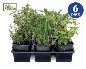 6 herbs for £2.99 from Aldi from Thurs 30/4